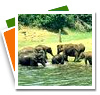 South India Wildlife
